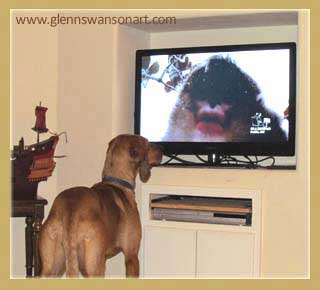 hounddog watches tv
