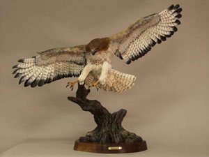 Redtail bird by Glenn Swanson
